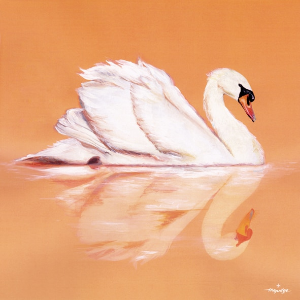 thejudge-animoreflecto_SWAN